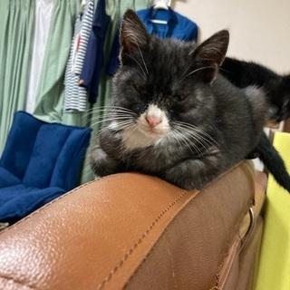 生後3か月の2匹の子猫です