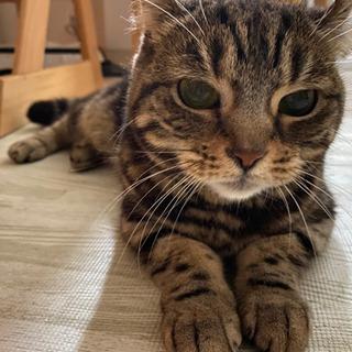 【札幌近郊】里親を募集しています! - 猫