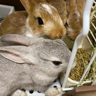 仔ウサギ4匹(相談中です)