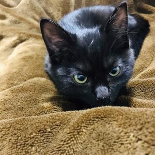 黒猫 甘えん坊です⭐︎里親募集⭐︎