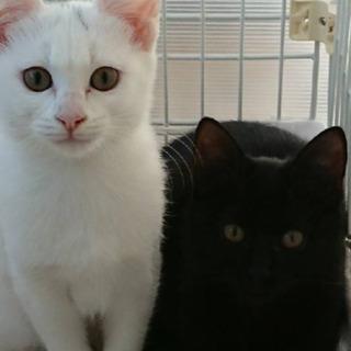 3か月半姉妹 白、黒