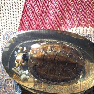 ⭐️再投稿になります!箱付き亀とカニの剥製「全国郵送可能」