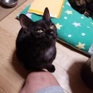 黒ネコ 6/10産まれ 保護猫 再募集