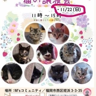 黒の長毛の男の子【11/22(日) 譲渡会】 - 里親募集