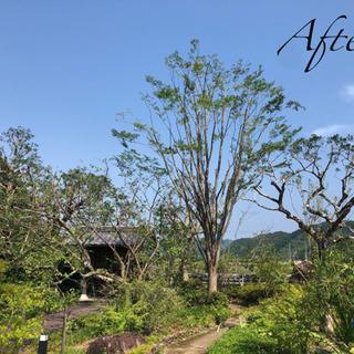 高知県内で、庭木の剪定・伐採や草刈りなどはお気軽にご相談ください...