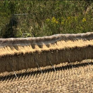 餅米1俵30キロ(籾) 令和2年10月収穫