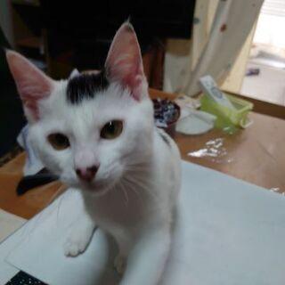 12月3日更新。保護猫を迎えよう! ♂♀(♀は避妊手術済み。)生後4ヶ月。 - 猫