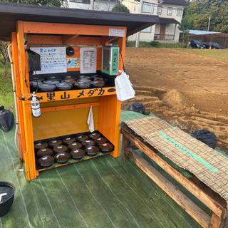 里山めだか メダカ無人販売所 11/20出店詳細