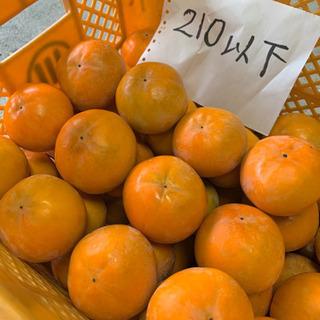 富有柿M・S、1個30円