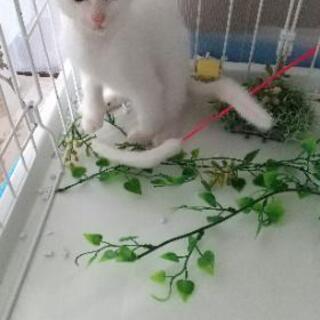 可愛い白猫です