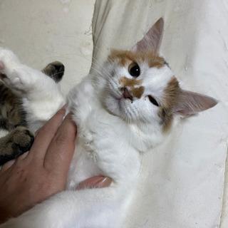 4ヶ月程の子猫です。