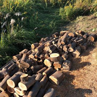 伐採木、原木、薪、無償で引き取ります。