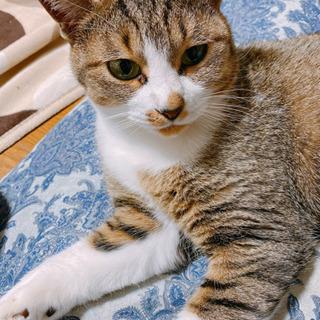 甘えん坊の姉妹ネコ!