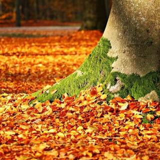 日比谷公園で秋スケッチ 11/23(祝)第4回 現在11名…
