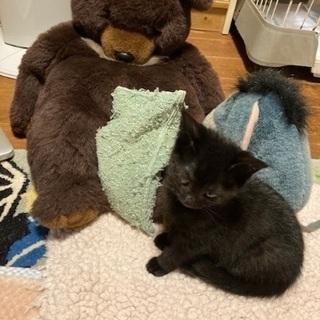 元気な黒猫の男の子、甘えん坊です(生後2ヶ月位) - 長生郡