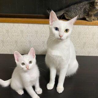 保護猫・にゃんこ ゆるやか譲渡会in神戸の画像