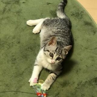 好奇心旺盛のサバシロ仔猫