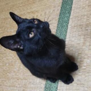 【里親さま決定★】激かわ♥生後3ヶ月半くらいの黒猫くん♂🎃💜