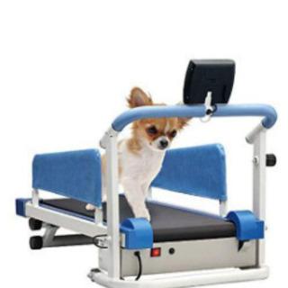 【ネット決済】犬用ウォーキングマシーン