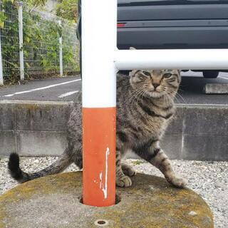 ≪保護でき次第、募集再開します≫キジトラの猫ちゃん