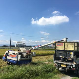 新米 ひとめぼれ 玄米 30キロ 農家直送 格安