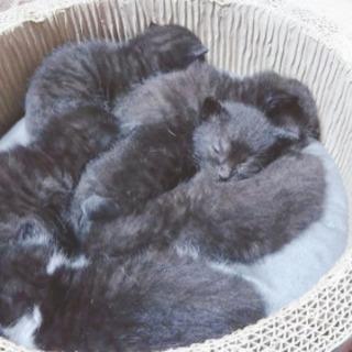 仔猫6匹生後1ヶ月半&優しい母猫