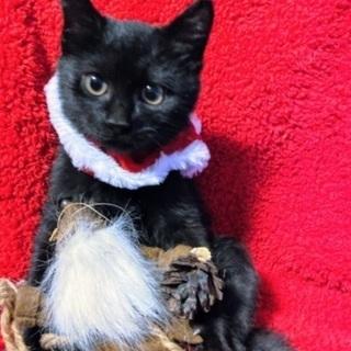 生後3ヶ月黒猫男の子