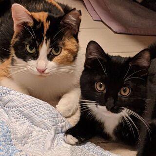 くつ下はいたクロ猫君と、黒三毛ちゃん