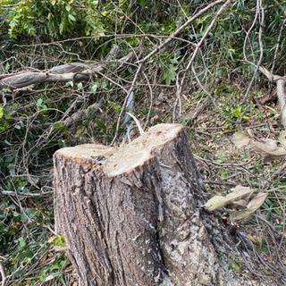 仙台市内で庭木伐採、木の伐採、剪定作業