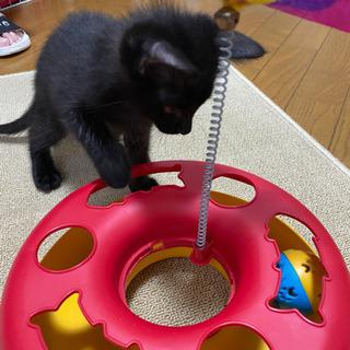 黒猫メス 里親様募集