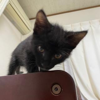黒猫メス 里親様決まりました - 猫