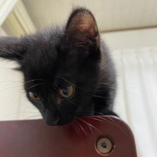 黒猫メス 里親様決まりました − 富山県