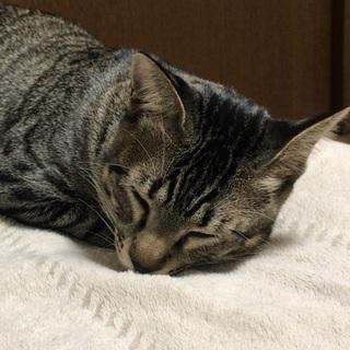 マイペースでのんびり、おっとりな性格のオス猫ちゃん