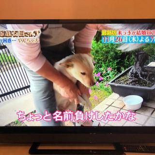 液晶テレビ REGZA 32V31 [32インチ]