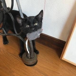 黒猫ちゃん3ヶ月とサビ柄ママ11ヶ月