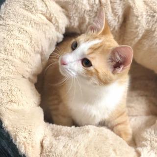 仮名) ヤマト - 猫