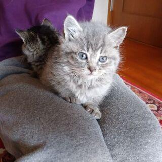フワフワの仔猫