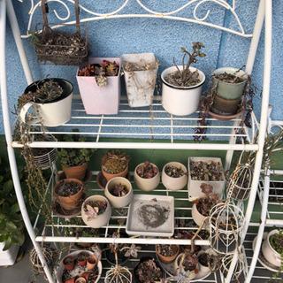 多肉植物等 写真の物すべて 無料で差し上げます