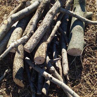 無料!薪にどうですか?桐の木