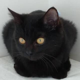 お礼。しまなみ海道 黒猫 ♂ 馴れてます♪