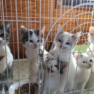 仔猫ちゃん3匹の里親さん募集中