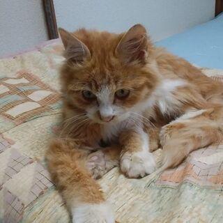 手の掛からないイイ子猫です。里親急募集 − 福岡県
