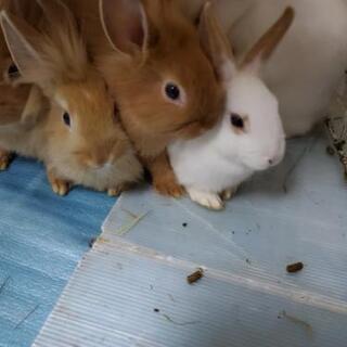 子ウサギの里親募集中