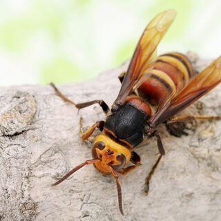 【大人気】ハチの巣駆除 ~国家資格保有のプロスタッフご訪問~