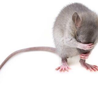 【大人気】徹底ネズミ駆除 ~国家資格保有のプロスタッフご訪問~
