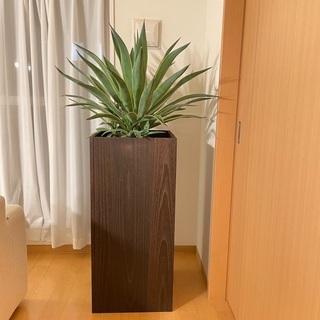 アカベベネズエラ 8号鉢 観葉植物 プランター付き