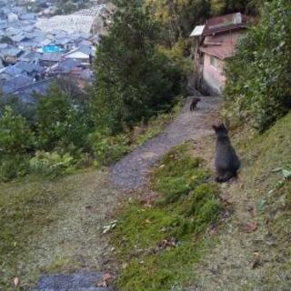 ネコ友募集、ネコと一緒に住んでるか、ネコと住んでたことのあ…