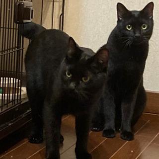 超ビビリな黒猫姉妹☆
