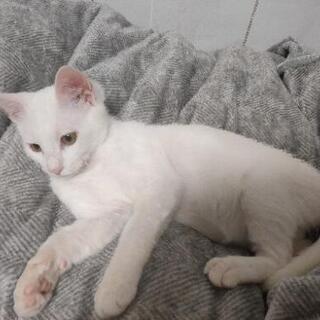 白猫 オス 4ヶ月ぐらい