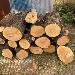伐採した木 差し上げます